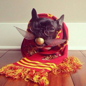 Harry-Potter-Costumes-Dogs